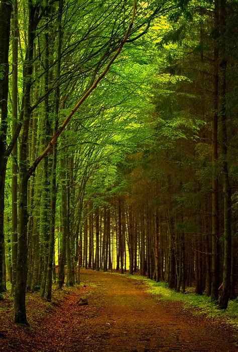 photo green forest path road nature  image