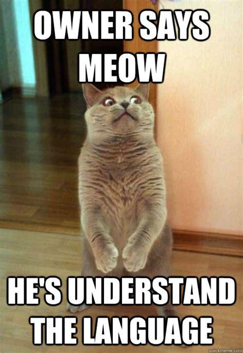 Cat Meow Meme - owner says meow cat meme cat planet cat planet