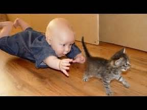 cats and babies cats and babies together 1funny