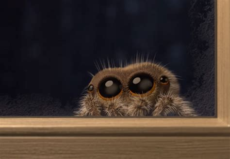 Lucas The Adorable Spider That Cured Everyone's