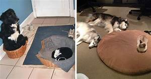 10 asshole cats who stole dog beds and didnt give a damn With cat and dog furniture
