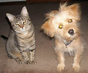 Cat And Dog Free Stock Photo