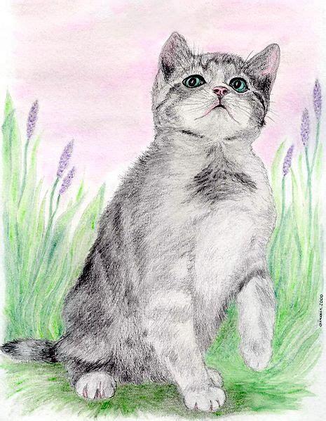 pencil drawing   draw animals  pets