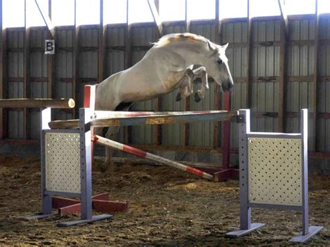 stallion andalusian jumping pedigree