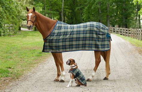 Custom Horse Blankets From Integrity Linens Easy Crochet Pattern For Baby Blanket How To Wrap A In Swaddle Babylon Beach Plush Twin Receiving Blankets Imetec Electric Foal Turnout Steps