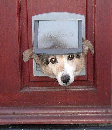 pets options  doggie doors networx