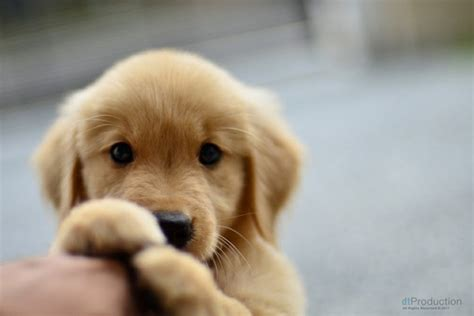 cute puppy pictures cute animal pictures and videos blog