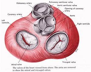Human Medical Physiology  November 2012
