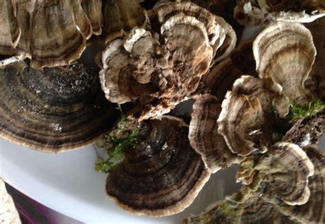 Pilze Im Garten Bodenbeschaffenheit by Pilzticker Thueringen 18 Funde Vom 29 10 2015 23 12 2015