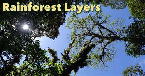rainforest layers discover  layers   rainforest