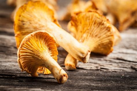 Tipi Di Funghi Da Cucinare by Funghi Tipologie E Usi In Cucina Agrodolce