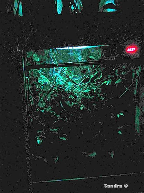 glasterrarium beleuchtung aussen cham 228 terrarien iii