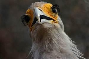 Top 10: Animals that can really bat an eyelash | natural ...