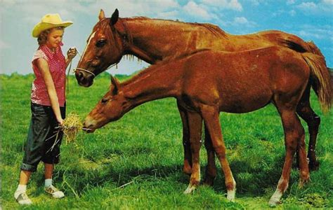 friendly horses gems postcard