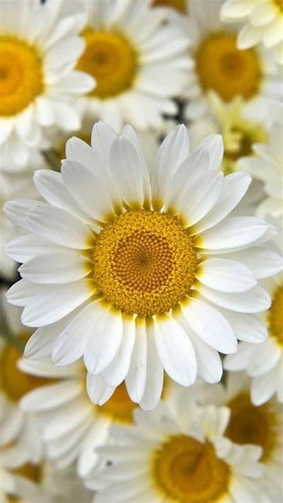 Iphone Flower Flowers Yellow Backgrounds Wallpapers Desktop