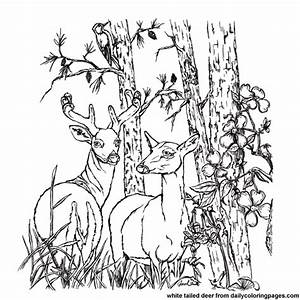 Realistic Deer Coloring Pages Coloring Page For Kids ...