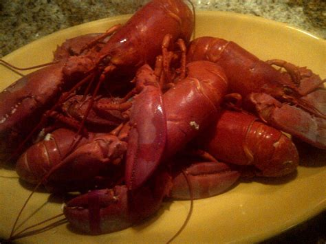 how to boil lobster lobster boiling 101 food wine chickie insider