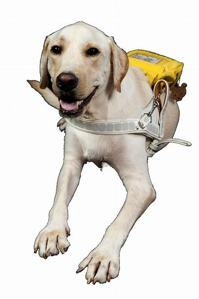 Dog Cunning Tax Guide Canine Background Save