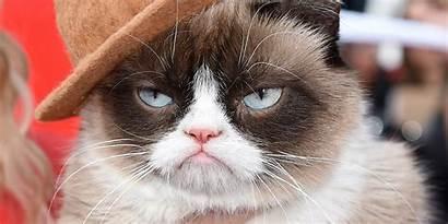 Grumpy Cat Meme Funny Humor Quote Wallpapersafari