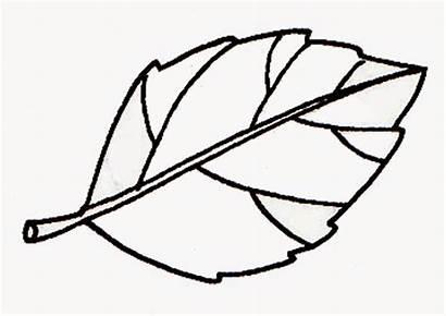 Daun Gambar Sketsa Clipart Mewarnai Kartun Apel