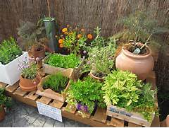 Herb Garden Design by Container Herb Garden For Beginners Images