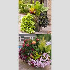 1000+ Images About Container Gardening Ideas On Pinterest