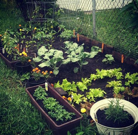 Small Home Garden Pictures, Photos, And Images For