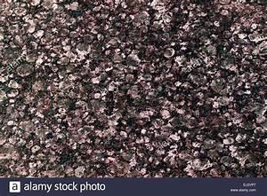 Bild Rosa Grau : wei rosa grau schwarzen marmor hintergrund stockfoto bild 79992927 alamy ~ Frokenaadalensverden.com Haus und Dekorationen