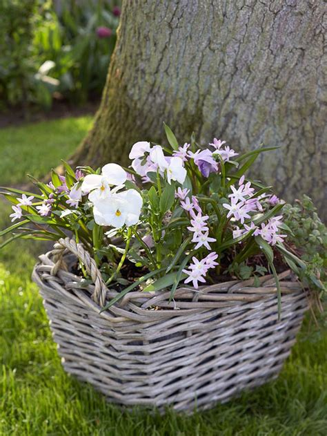 plant bulbs in pots now for sand and sisal