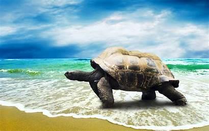 Turtle Wallpapers Sea Beach Animal Turtles Walking