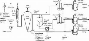 Fermentation Of Sugar Cane To Ethanol
