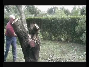Rasenmähen Ab Wann : die traurige geschichte von unserem kirschbaum youtube ~ Watch28wear.com Haus und Dekorationen