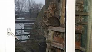 Richtig Lüften Im Sommer : richtig l ften im winter und sommer umdreiecken denken ~ A.2002-acura-tl-radio.info Haus und Dekorationen