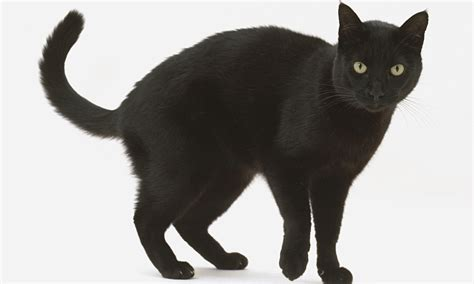 black cats generation selfie is spurning black cats life and style the guardian