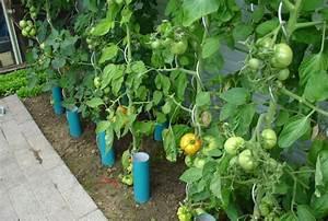 Arrosage Des Tomates : pots facilitant l 39 arrosage les tomates sous serre ~ Carolinahurricanesstore.com Idées de Décoration