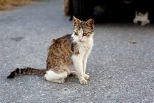 fiv in cats 10 symptoms of feline immunodeficiency fiv