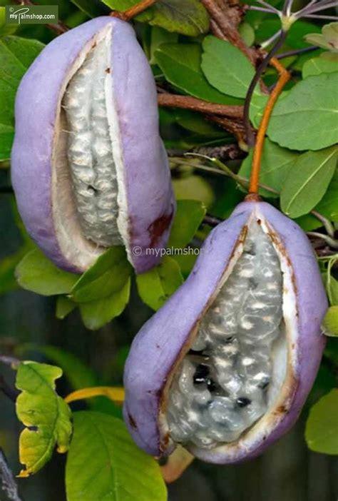 Garten Pflanzen Essbar by Myplantshop Essbare Pflanzen