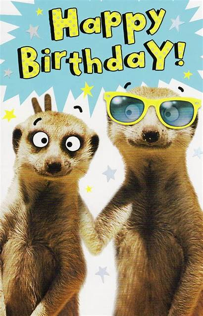 Birthday Card Happy Funny Cards Wishes Meerkat