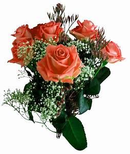 Rose Flower PNG Transparent Image - PngPix