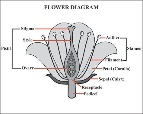 Diagram Of Flower Part by Flower Diagram Unmasa Dalha