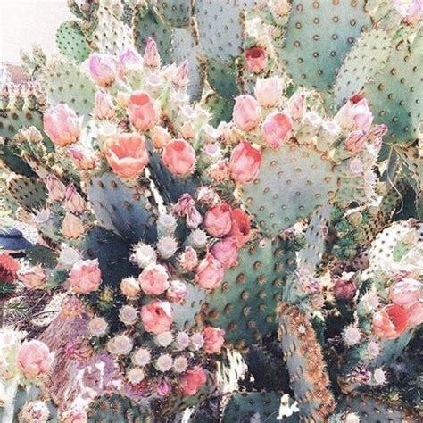 cactus flowers tumblr