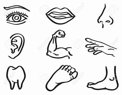 Outline Parts Coloring Drawing Human Clipart Pages