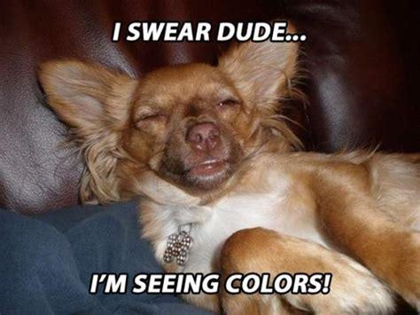 Stoned Dog Meme - stoner dogs 20 hilarious pics of the newest meme based off 10 guy