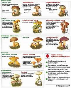 Бородавки фото симптомы и лечение