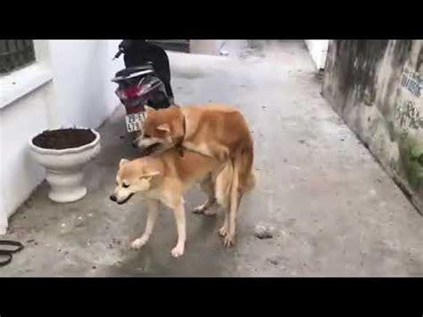 Sex hd animal Dog