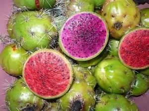 Pitaya Fruta De Mexico
