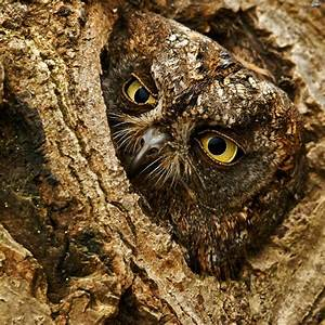 Perfect Camouflage Of Animals