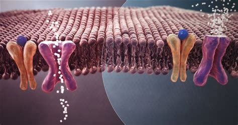 viral insulin discovery suggests microbes  influence