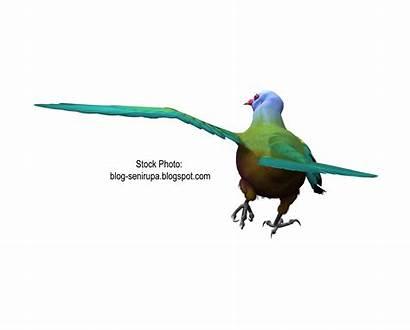 Burung Gambar Merak Resolution Gokil Vektor Mata