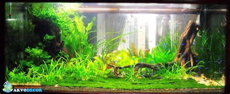 jual jual aquascape  aquarium air laut murah